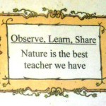 Observe Learn Share